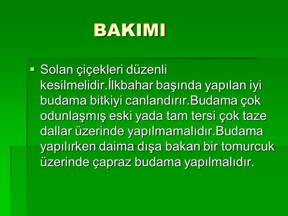 BAKIMI