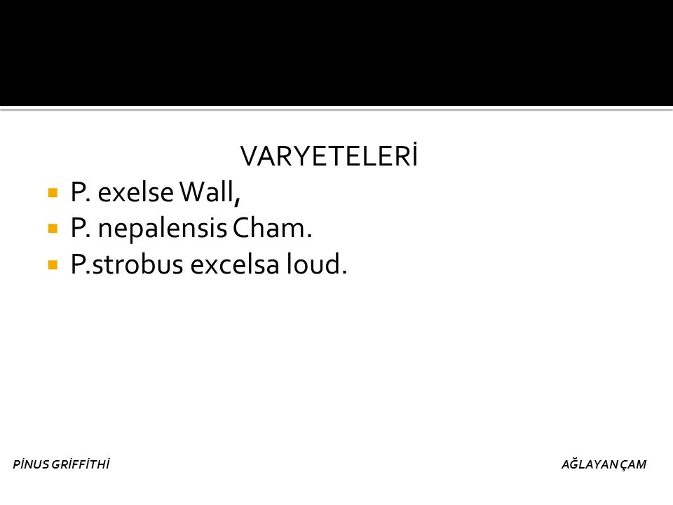 VARYETELERİ P. exelse Wall, P. nepalensis Cham.