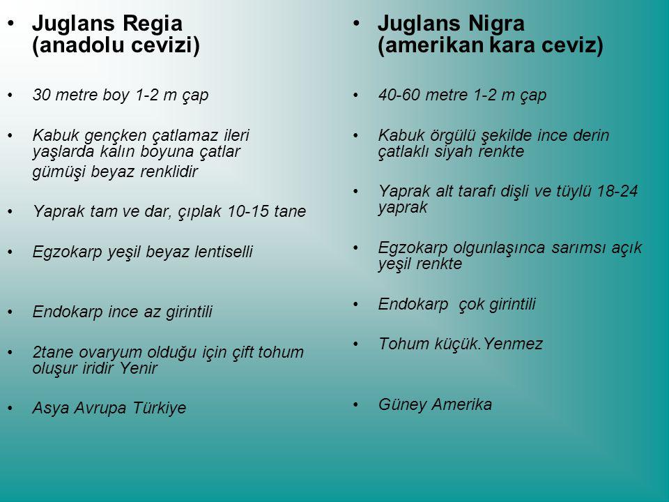 Juglans Regia (anadolu cevizi) Juglans Nigra (amerikan kara ceviz)