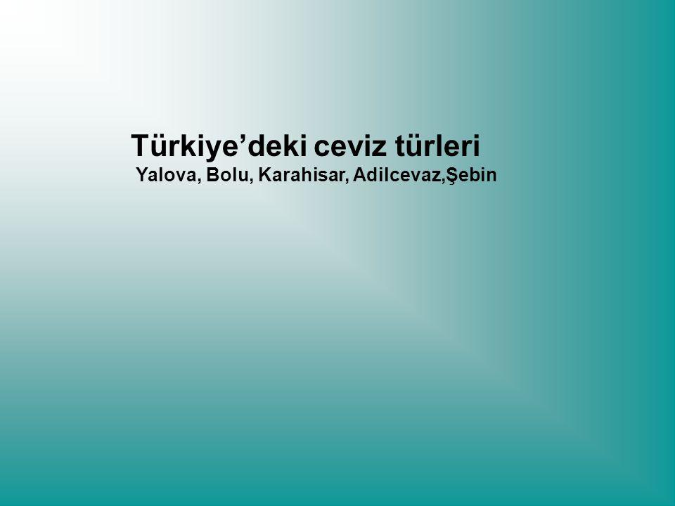 Türkiye'deki ceviz türleri