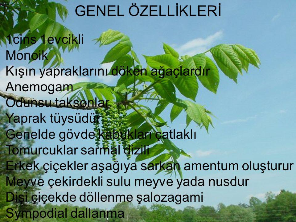GENEL ÖZELLİKLERİ 1cins 1evcikli Monoik
