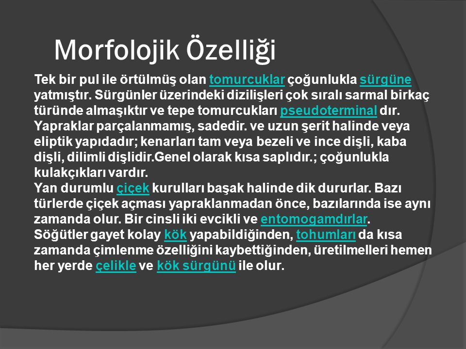 Morfolojik Özelliği