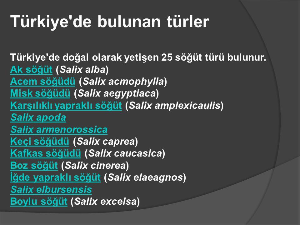 Türkiye de bulunan türler