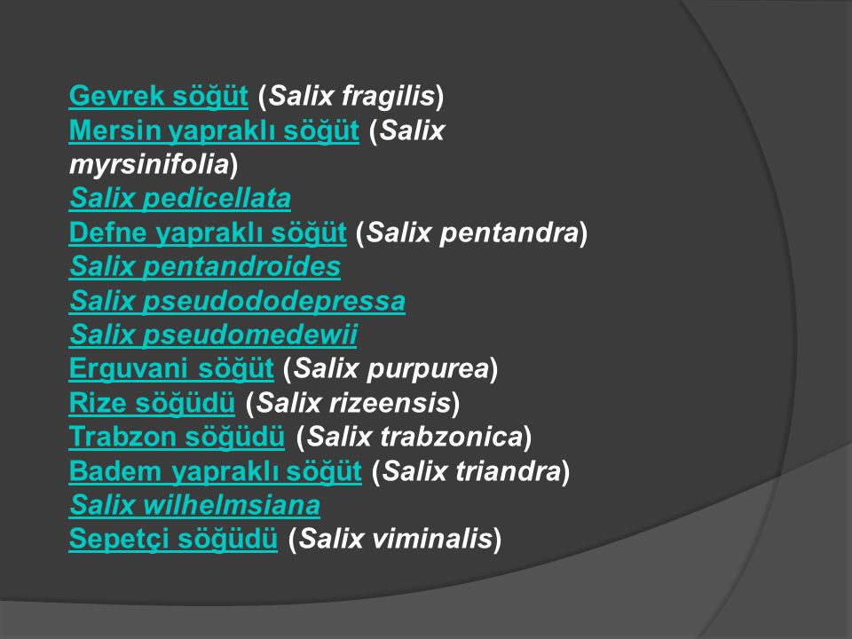 Gevrek söğüt (Salix fragilis)