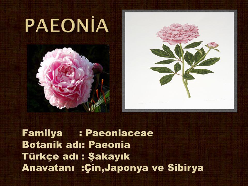 PAEONİA Familya : Paeoniaceae Botanik adı: Paeonia