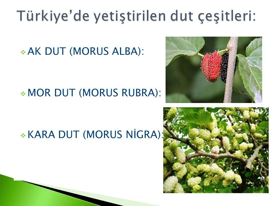 Türkiye'de yetiştirilen dut çeşitleri: