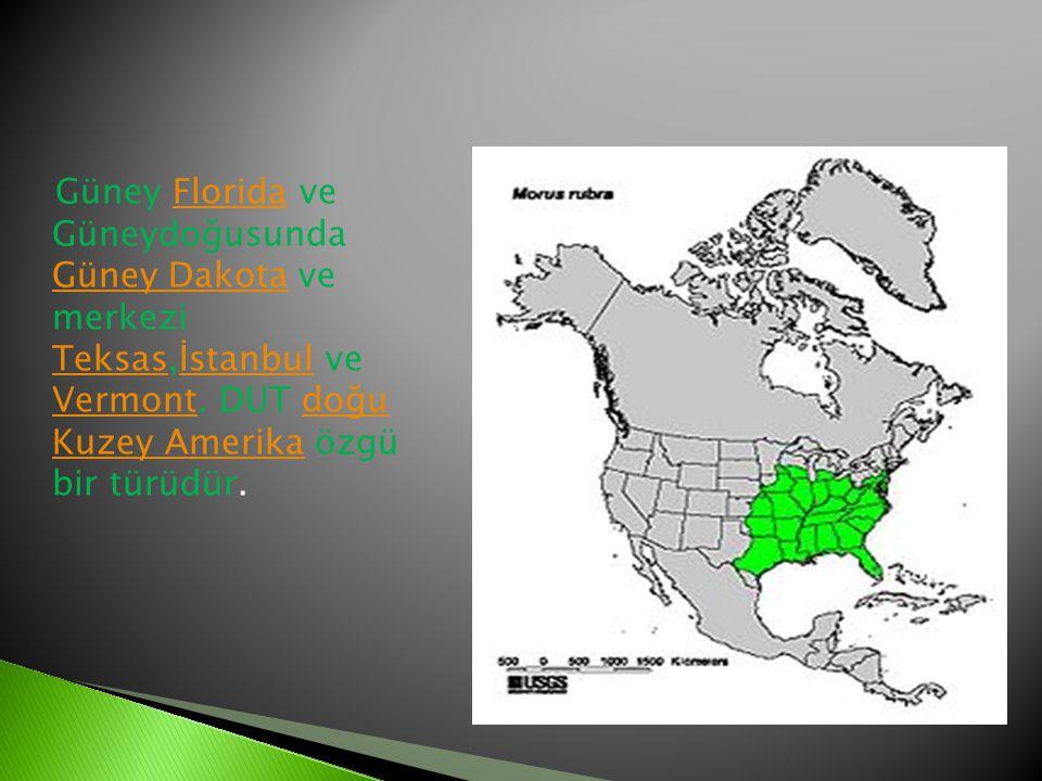 Güney Florida ve Güneydoğusunda Güney Dakota ve merkezi Teksas,İstanbul ve Vermont.