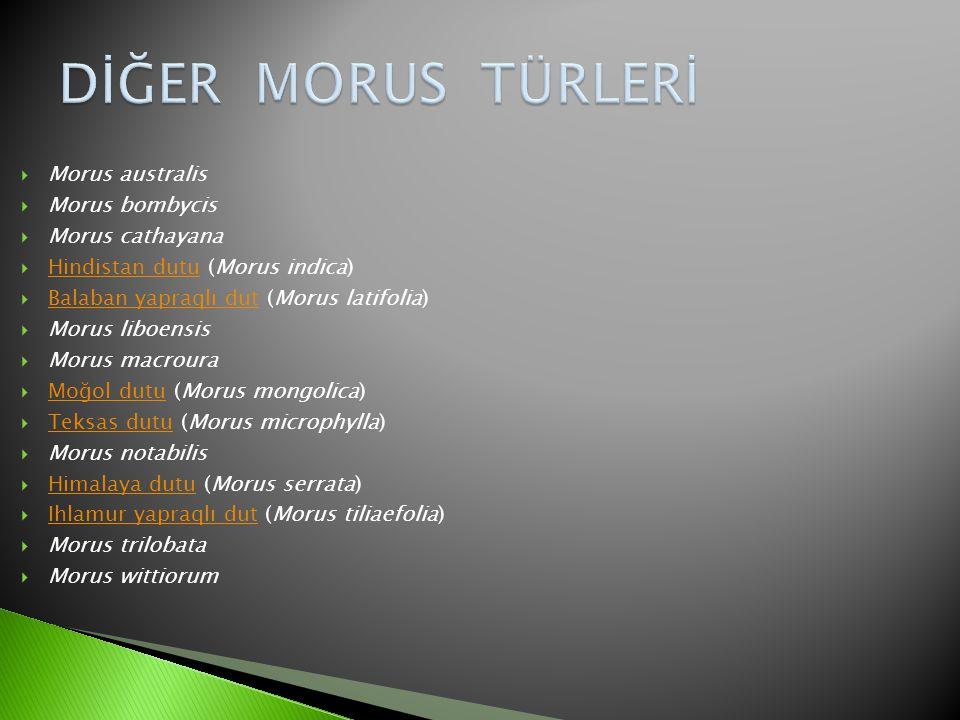 DİĞER MORUS TÜRLERİ Morus australis Morus bombycis Morus cathayana