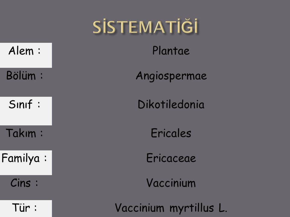SİSTEMATİĞİ Alem : Plantae Bölüm : Angiospermae Sınıf : Dikotiledonia