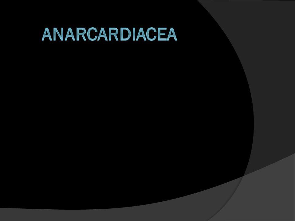 Anarcardiacea