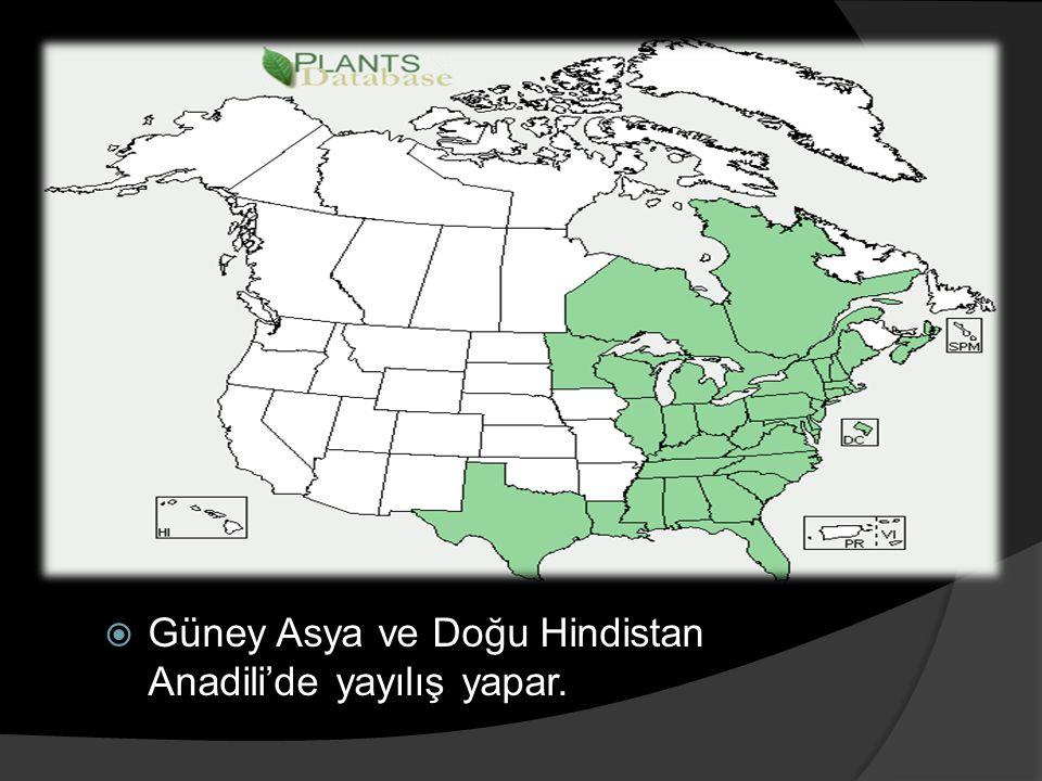 Güney Asya ve Doğu Hindistan Anadili'de yayılış yapar.