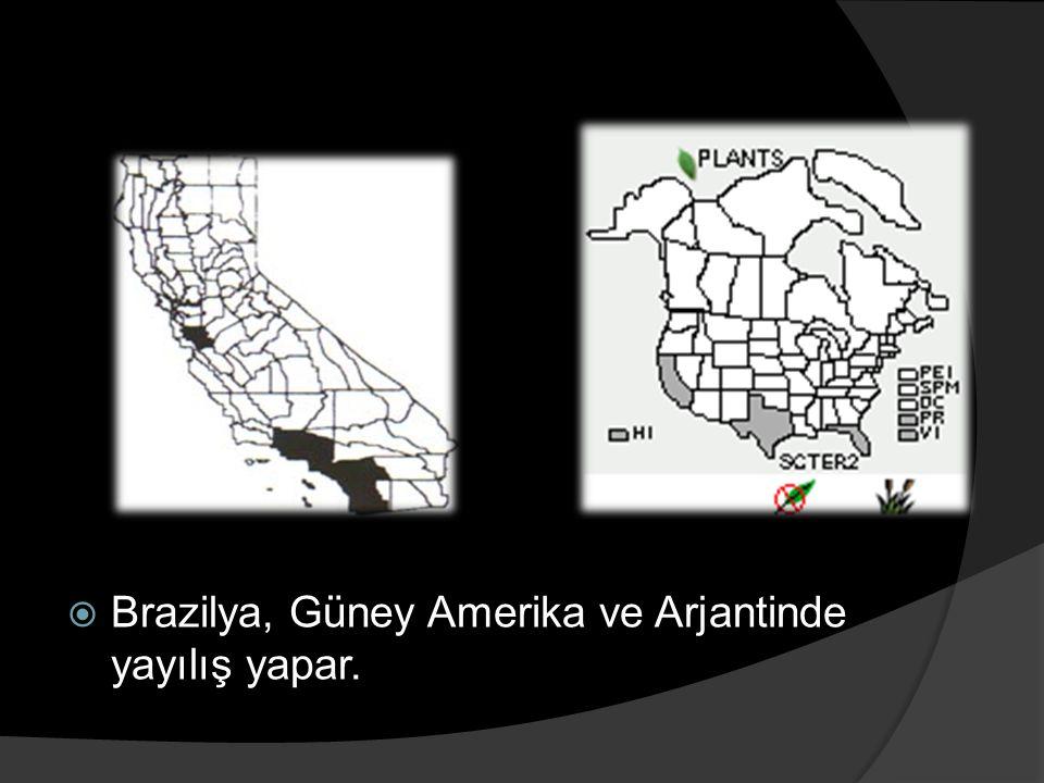 Brazilya, Güney Amerika ve Arjantinde yayılış yapar.