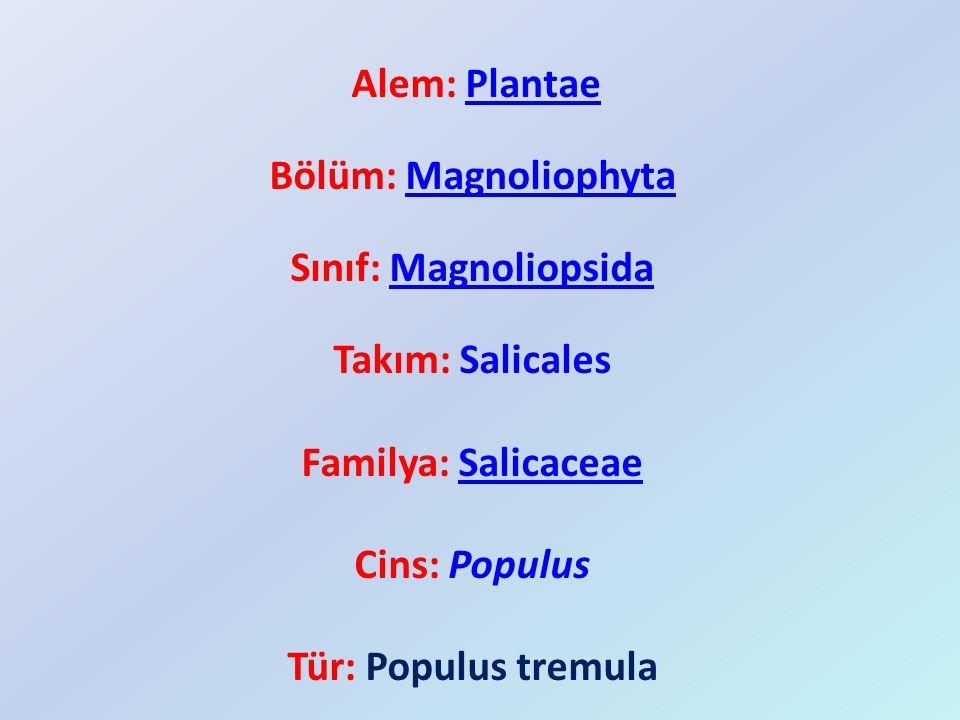 Bölüm: Magnoliophyta Sınıf: Magnoliopsida Takım: Salicales