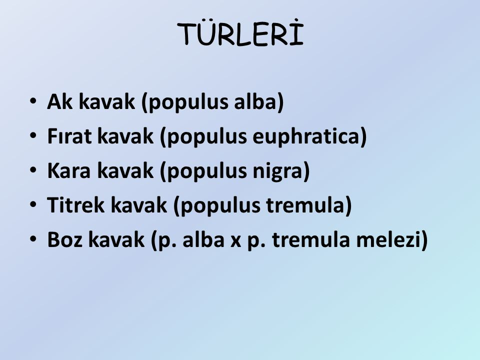 TÜRLERİ Ak kavak (populus alba) Fırat kavak (populus euphratica)