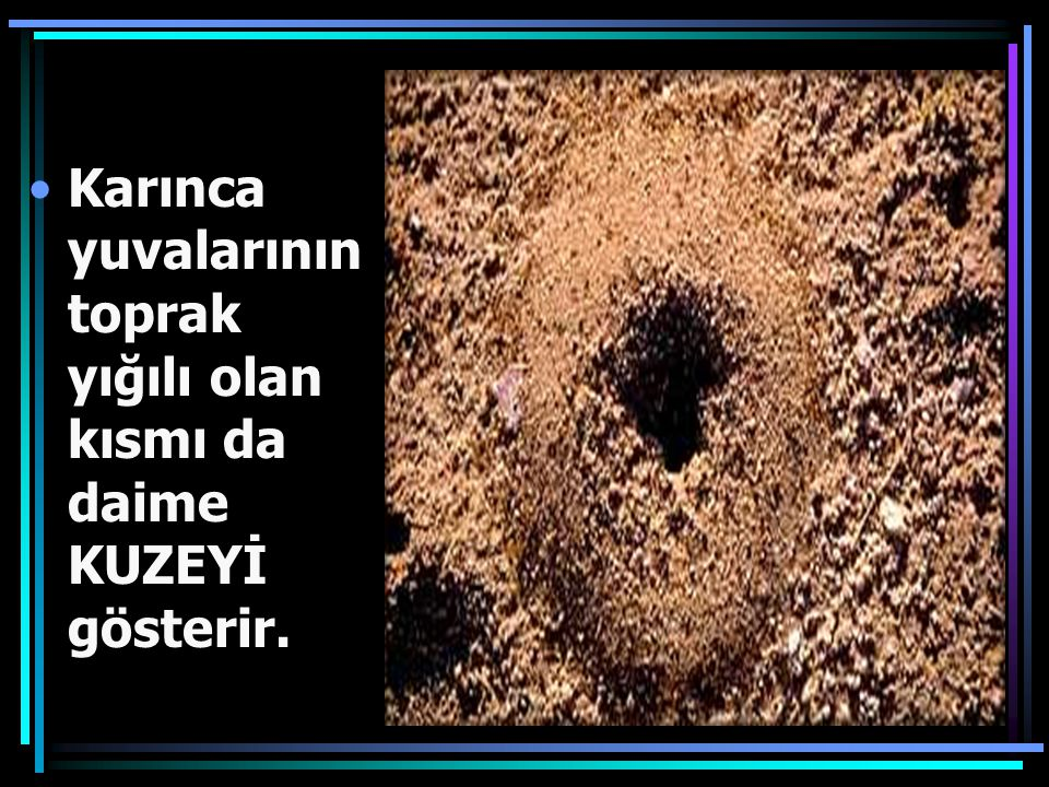 Karınca yuvalarının toprak yığılı olan kısmı da daime KUZEYİ gösterir.