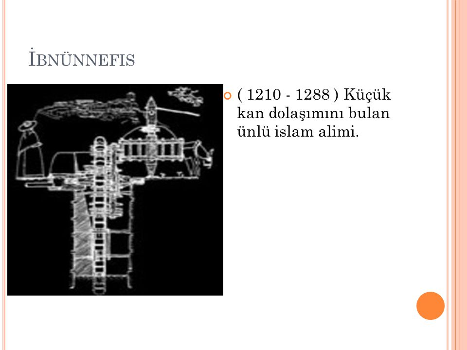 İbnünnefis ( 1210 - 1288 ) Küçük kan dolaşımını bulan ünlü islam alimi.