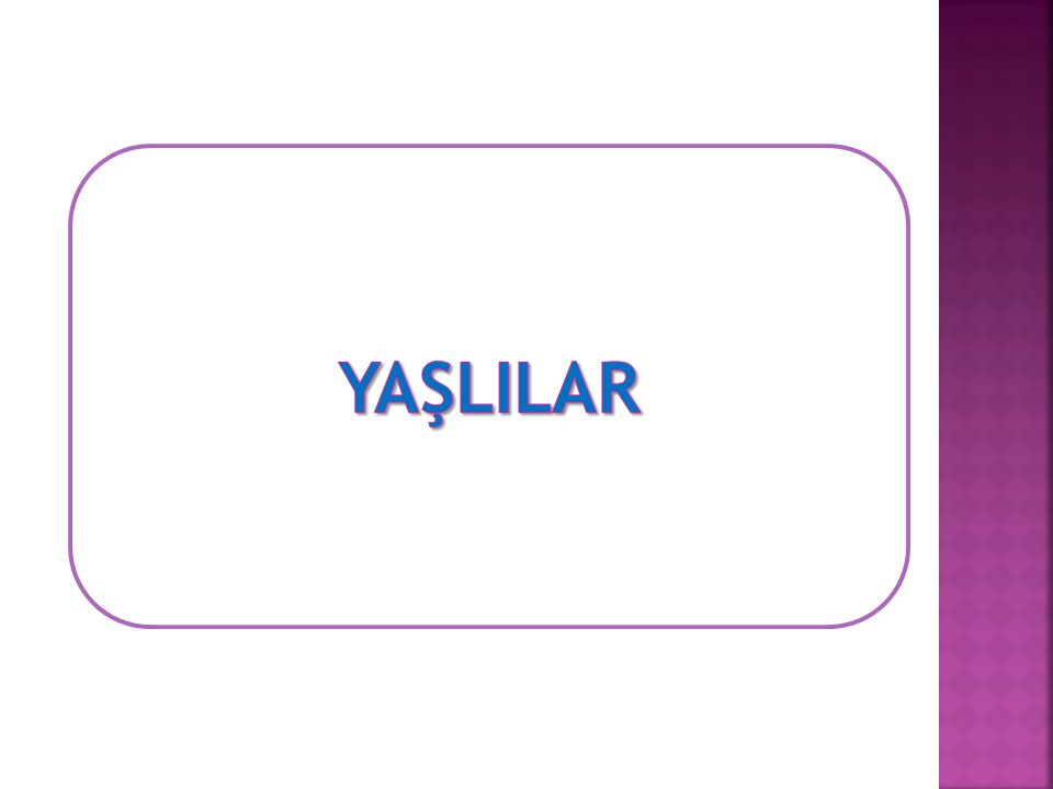 YAŞLILAR