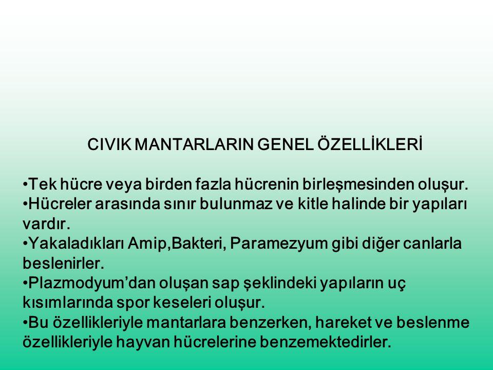 CIVIK MANTARLARIN GENEL ÖZELLİKLERİ