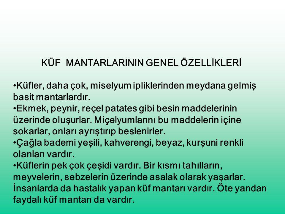 KÜF MANTARLARININ GENEL ÖZELLİKLERİ