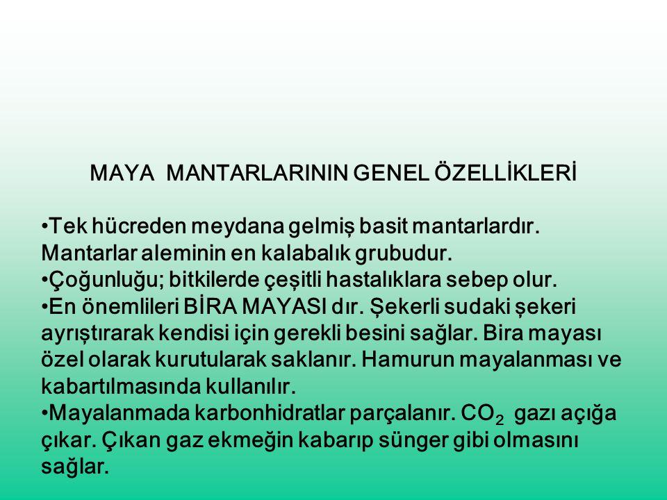 MAYA MANTARLARININ GENEL ÖZELLİKLERİ