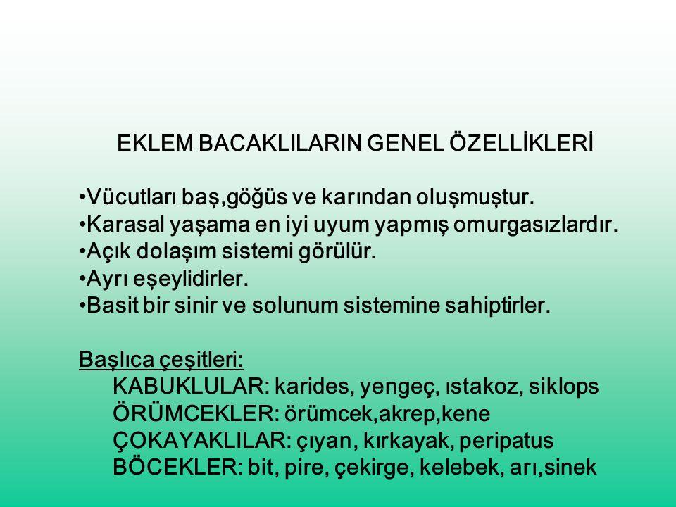 EKLEM BACAKLILARIN GENEL ÖZELLİKLERİ