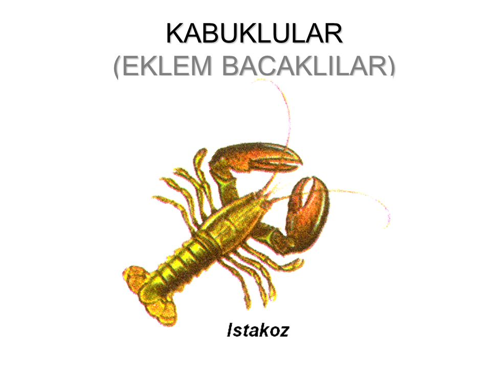 KABUKLULAR (EKLEM BACAKLILAR)