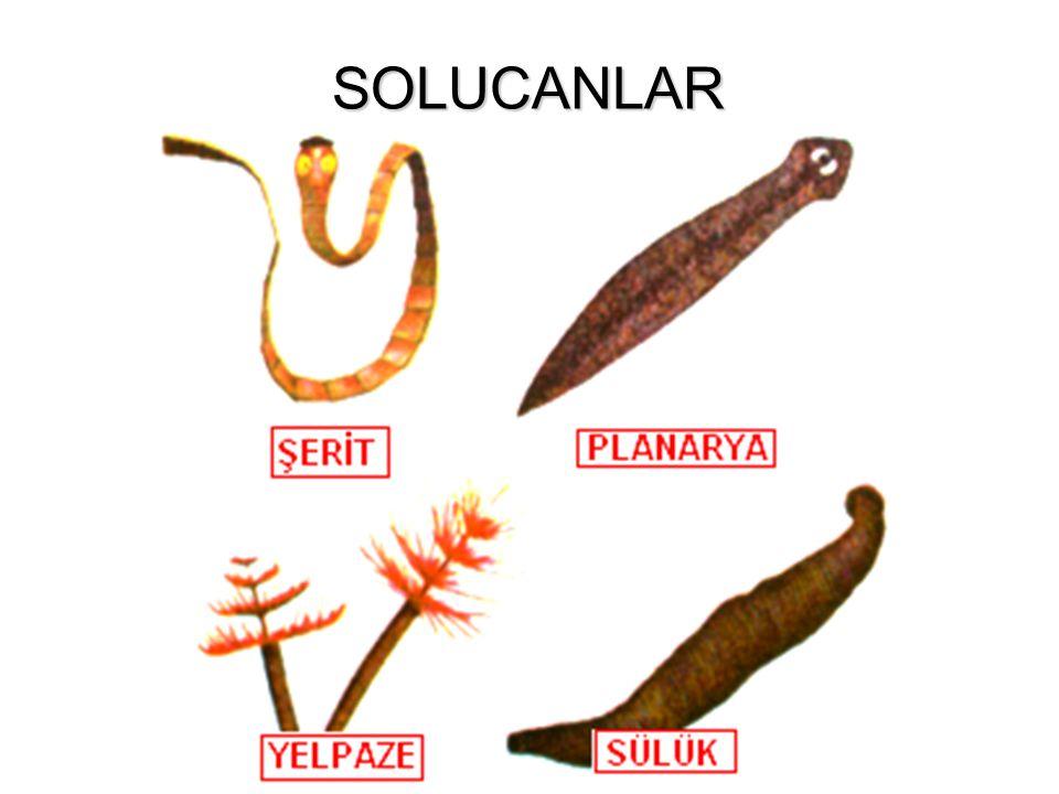 SOLUCANLAR