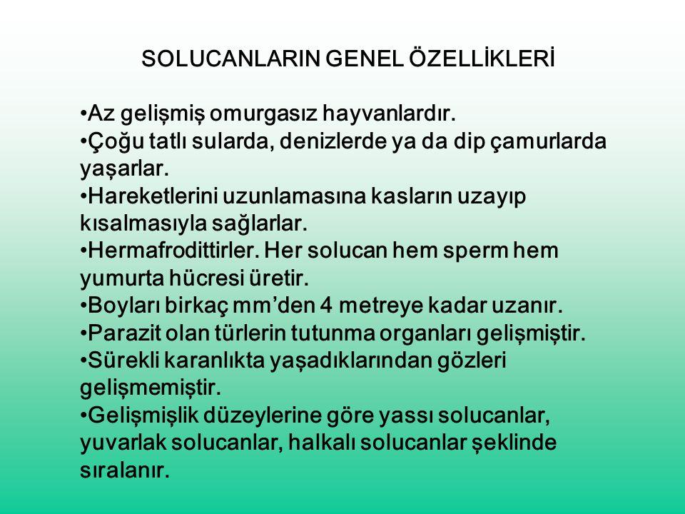 SOLUCANLARIN GENEL ÖZELLİKLERİ