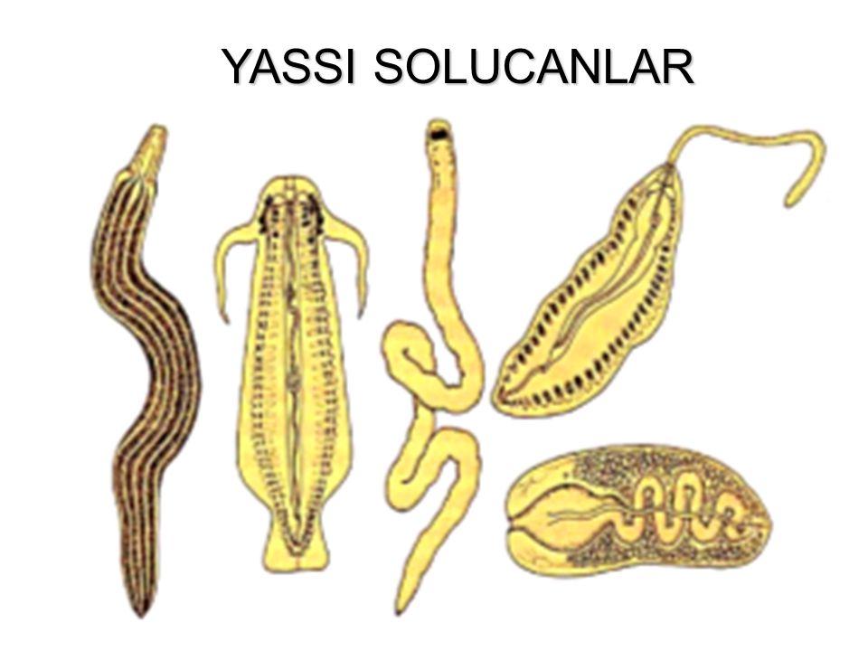 YASSI SOLUCANLAR