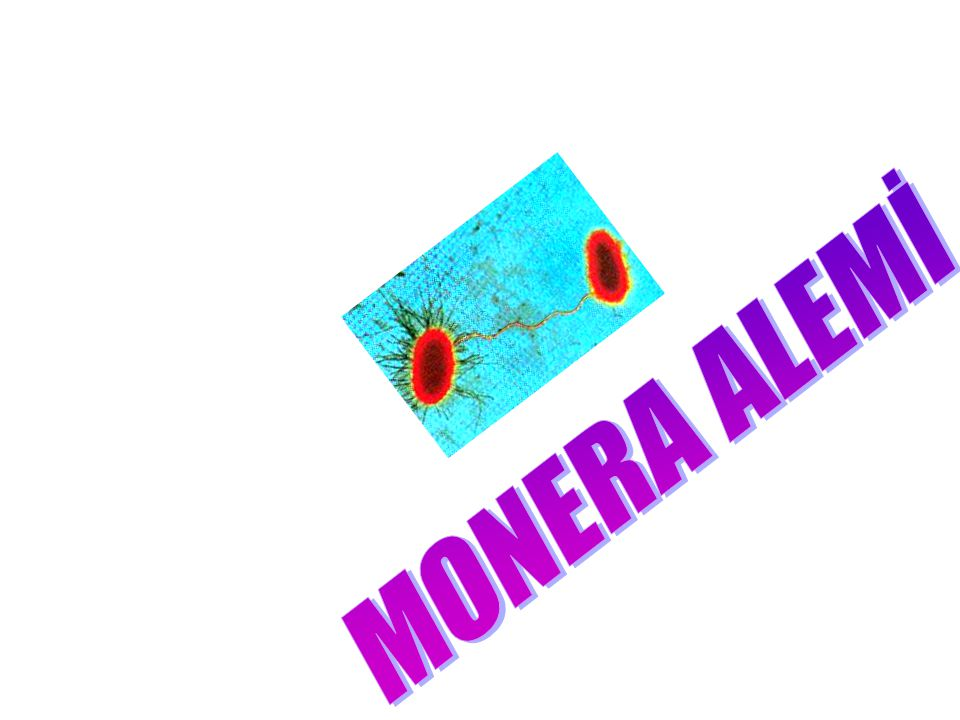 MONERA ALEMİ