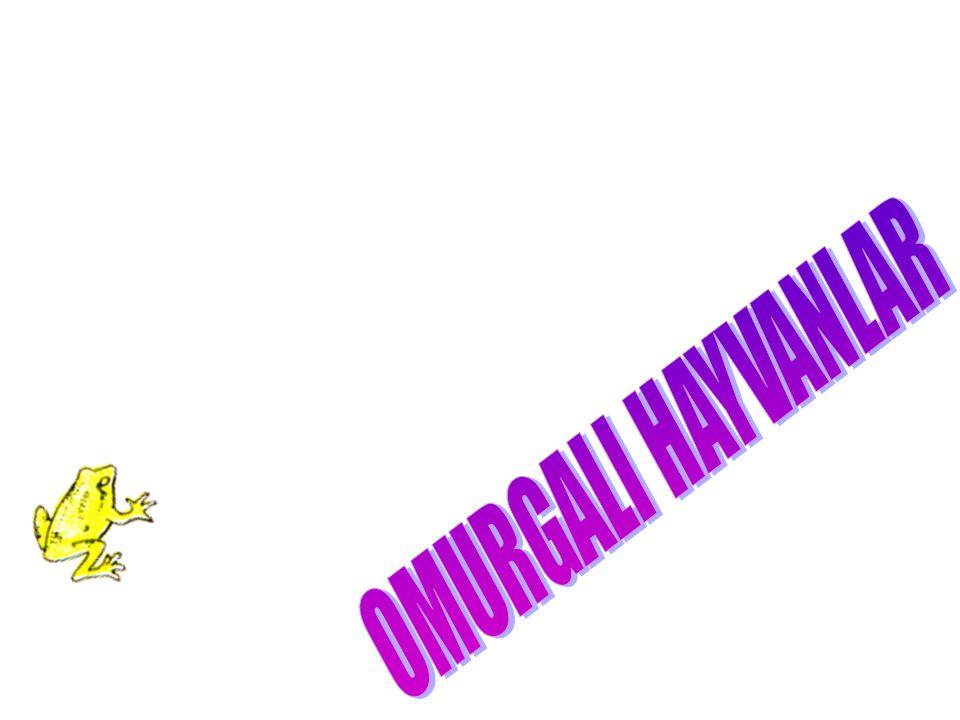 OMURGALI HAYVANLAR
