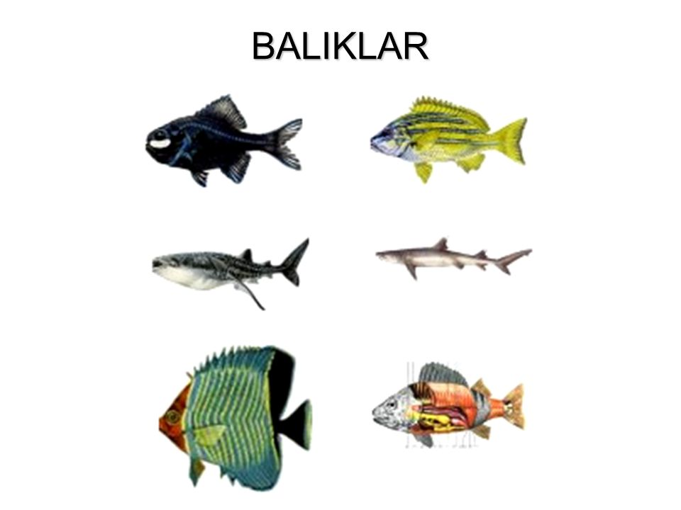 BALIKLAR