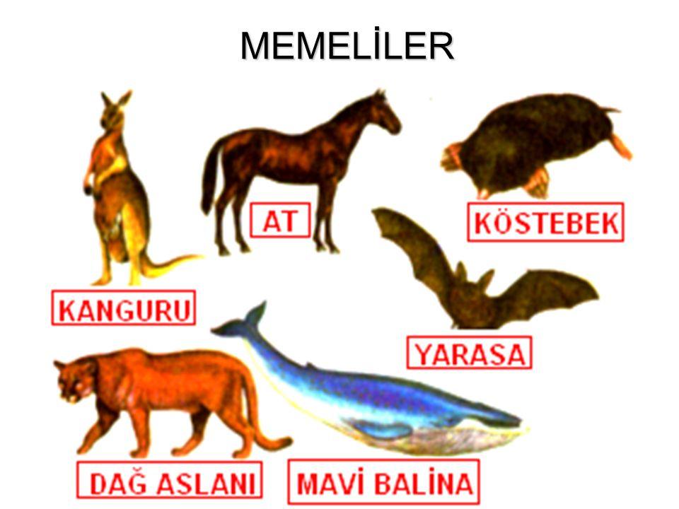 MEMELİLER