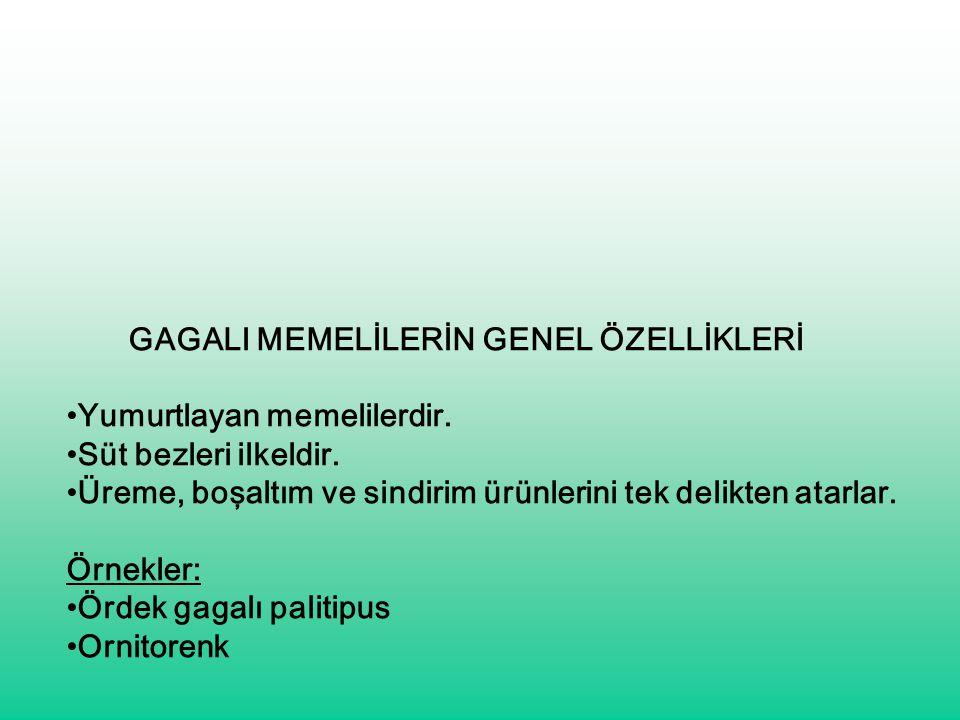 GAGALI MEMELİLERİN GENEL ÖZELLİKLERİ