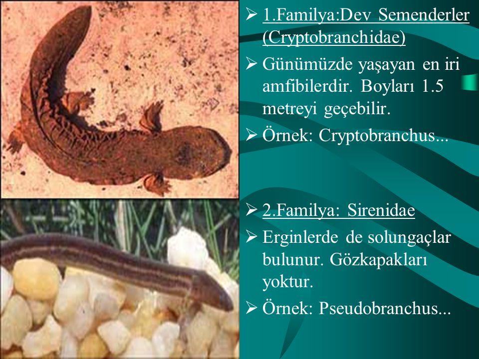 1.Familya:Dev Semenderler (Cryptobranchidae)