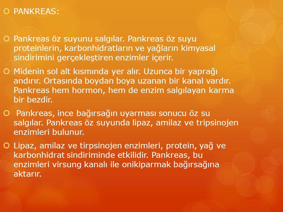 PANKREAS: