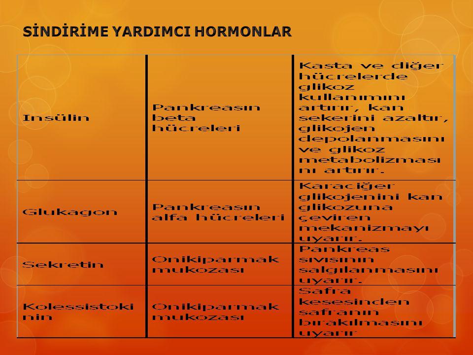 SİNDİRİME YARDIMCI HORMONLAR
