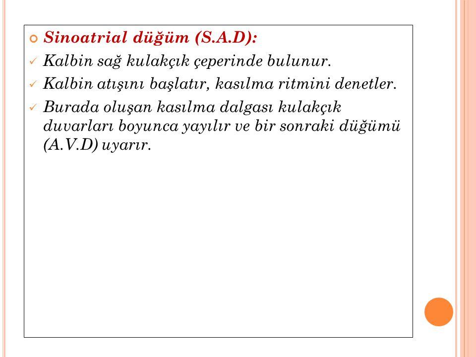 Sinoatrial düğüm (S.A.D):