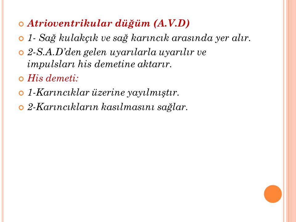 Atrioventrikular düğüm (A.V.D)