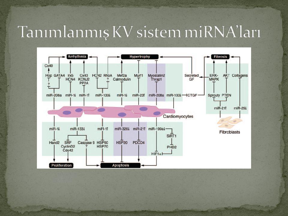 Tanımlanmış KV sistem miRNA'ları