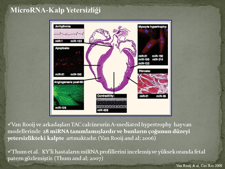 MicroRNA-Kalp Yetersizliği