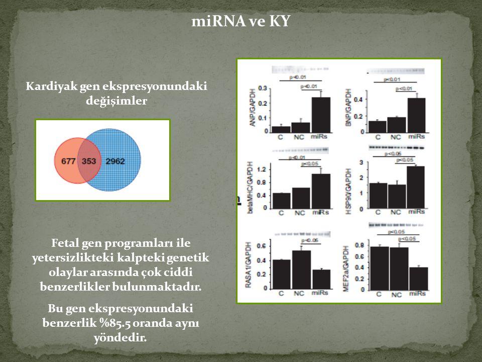 miRNA ve KY Kardiyak gen ekspresyonundaki değişimler