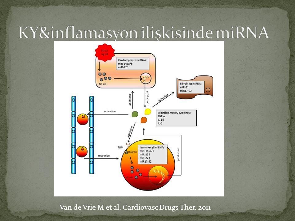KY&inflamasyon ilişkisinde miRNA