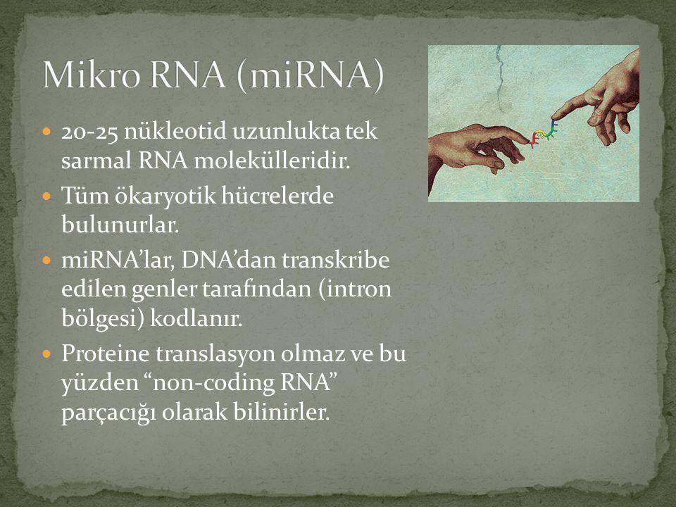Mikro RNA (miRNA) 20-25 nükleotid uzunlukta tek sarmal RNA molekülleridir. Tüm ökaryotik hücrelerde bulunurlar.