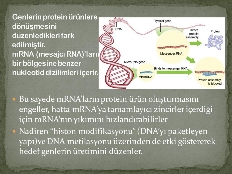 Genlerin protein ürünlere dönüşmesini düzenledikleri fark edilmiştir