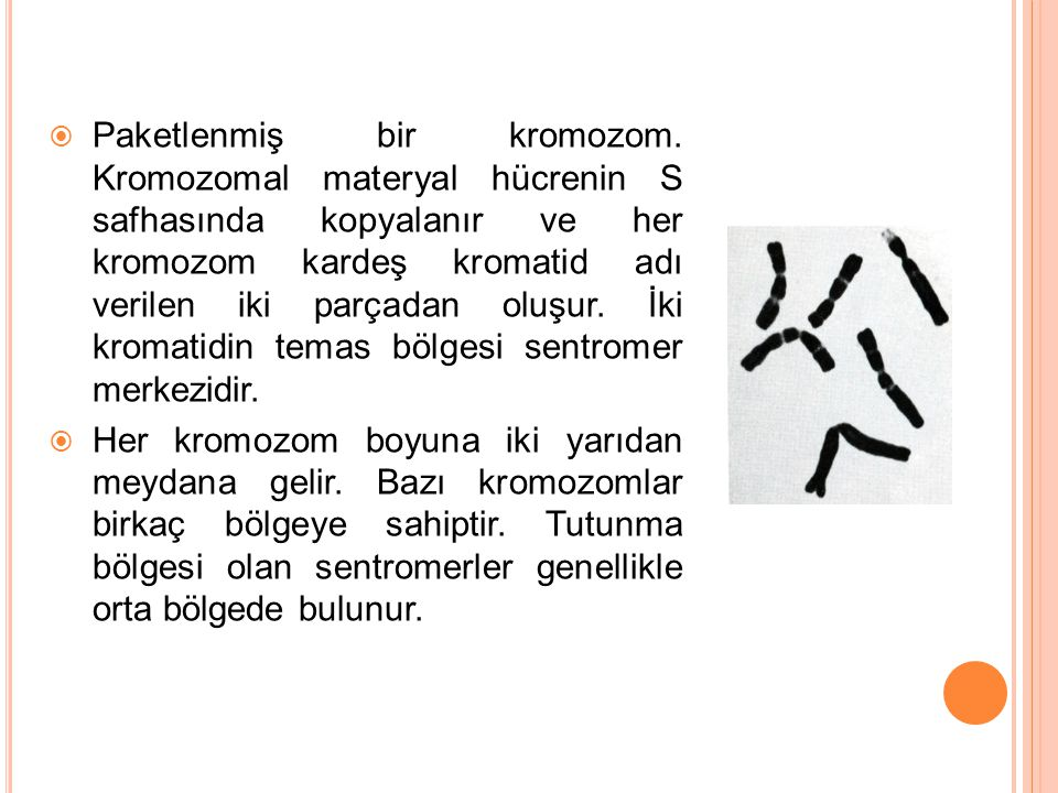 Paketlenmiş bir kromozom