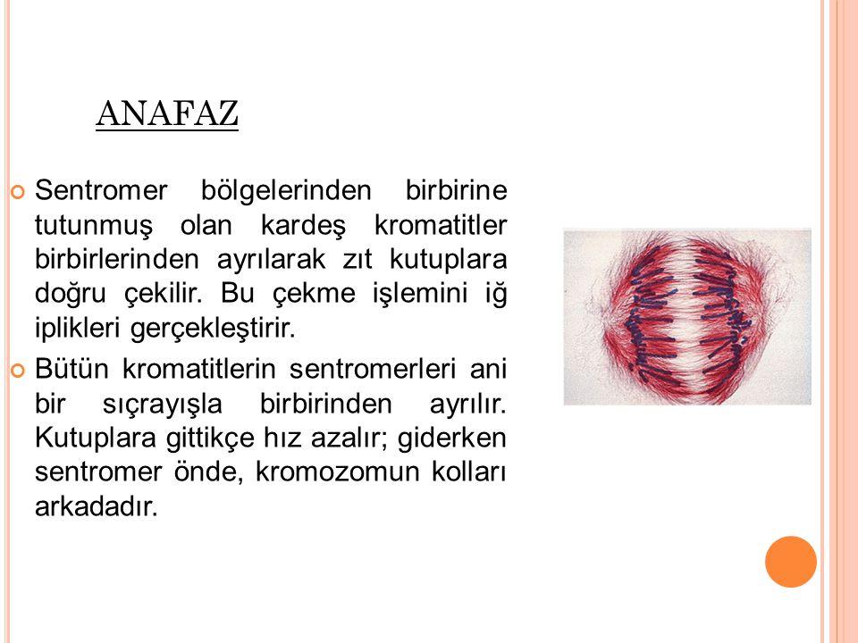 anafaz