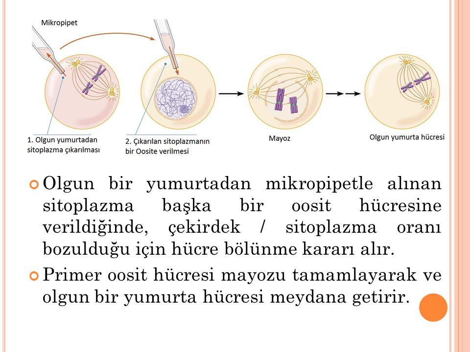 Olgun bir yumurtadan mikropipetle alınan sitoplazma başka bir oosit hücresine verildiğinde, çekirdek / sitoplazma oranı bozulduğu için hücre bölünme kararı alır.