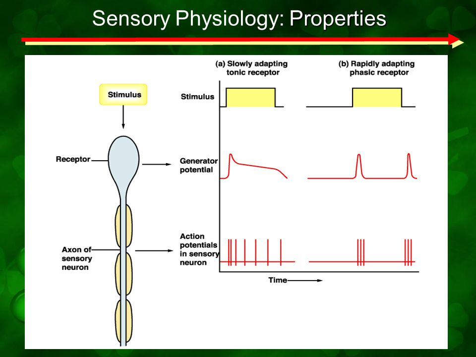 Sensory Physiology: Properties