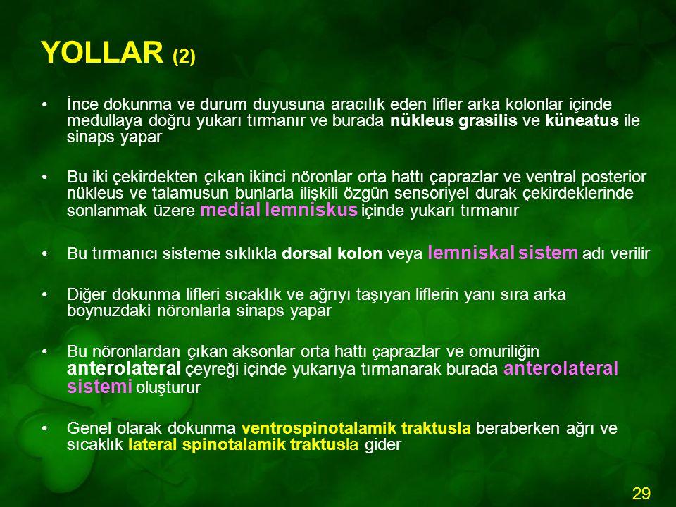 YOLLAR (2)